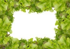 Ny grön sallad för ram Royaltyfri Bild