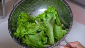 Ny grön sallad i en durkslag stock video