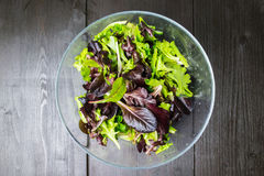 Ny grön sallad med arugula, röd chard, foderbeta och grönsallat I arkivbilder