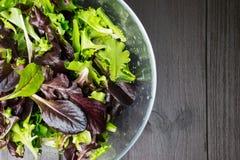 Ny grön sallad med arugula, röd chard, foderbeta och grönsallat I arkivfoton