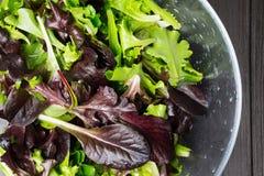 Ny grön sallad med arugula, röd chard, foderbeta och grönsallat I royaltyfri fotografi
