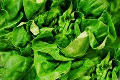 ny grön sallad royaltyfri fotografi