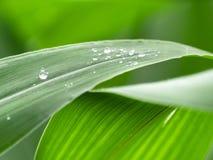Ny grön sidacloseup med regndroppar efter regn mot bakgrund field bl?a oklarheter f?r gr?n vitt wispy natursky f?r gr?s royaltyfria bilder