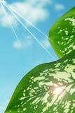 Ny grön sidor och himmel fotografering för bildbyråer