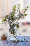 ny grön tea Tekopp med det gröna tebladet på trätabellen Tea med citronen Royaltyfri Fotografi