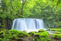 ny grön vattenfall Arkivfoto