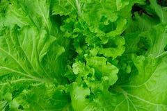 ny grönsak Arkivfoton