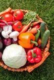 ny grönsak royaltyfri bild