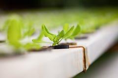 ny grönsak för lantgård Arkivbild