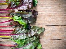 Ny grönsak för schweizisk chard för regnbåge royaltyfri foto