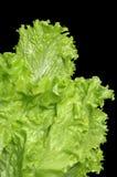 ny grönsallat Royaltyfri Fotografi