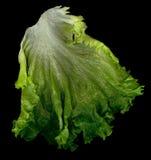 ny grönsallat Fotografering för Bildbyråer