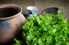 Ny grönsallat med lerakrukor och den keramiska vasen Royaltyfri Fotografi