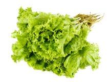 Ny grönsallat som isoleras på en vit bakgrund, beståndsdel av sunda näringsämnar för mat och begrepp för örtgrönsakingrediens royaltyfria bilder
