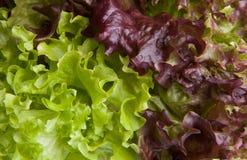 ny grönsallatsallad Royaltyfria Bilder