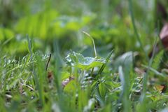 ny green Royaltyfri Fotografi