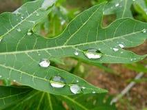 ny green royaltyfria foton