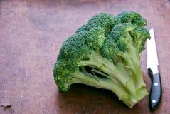 ny green för broccoli Royaltyfri Foto
