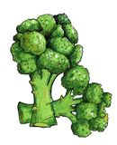 ny green för broccoli illustration Arkivbilder