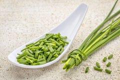 ny green för gräslökar Royaltyfria Bilder