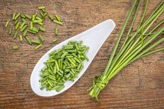 ny green för gräslökar Royaltyfria Foton