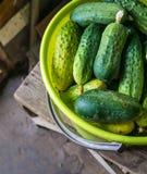 ny green för gurkor Royaltyfri Fotografi
