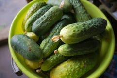 ny green för gurkor Royaltyfria Foton