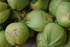 ny green för kokosnötter royaltyfri fotografi