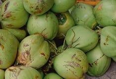 ny green för kokosnötter royaltyfri foto