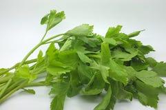 ny green för selleri royaltyfri foto