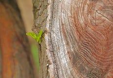ny green låter vara journalen den nya gammala foren Royaltyfri Foto