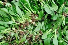 Ny greengrocery Arkivfoton