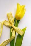 Ny gul tulpan Arkivfoton