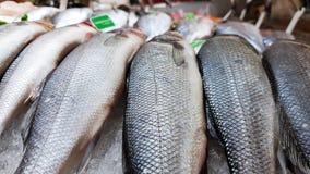 Ny havs- fisk på is som säljer i toppen marknad royaltyfri foto
