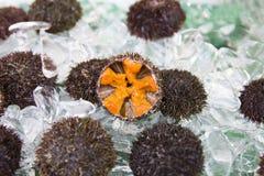 Ny havsgatubarn i en japansk fiskmarknad Arkivfoto