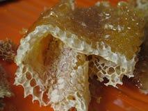 Ny honung i hårkammen Arkivbilder