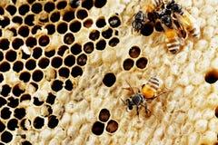 ny honungskaka Royaltyfri Foto