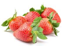 ny isolerad jordgubbe Arkivbilder