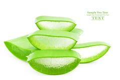 ny isolerad leaf för aloe över vera white royaltyfri fotografi