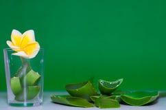 ny isolerad leaf för aloe över vera white Royaltyfri Foto