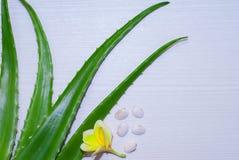 ny isolerad leaf för aloe över vera white arkivbild