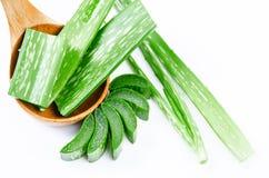 ny isolerad leaf för aloe över vera white royaltyfri bild