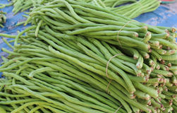ny japansk salladgrönsak för mat Arkivbild