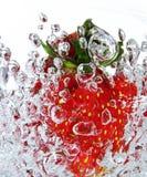 ny jordgubbe Royaltyfri Fotografi