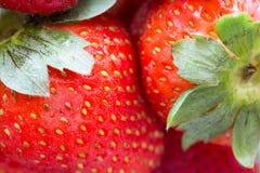 ny jordgubbe Fotografering för Bildbyråer