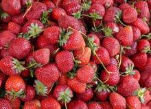 ny jordgubbe för bakgrund Arkivbilder