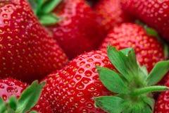 ny jordgubbe för bakgrund Moget i närbild Royaltyfri Fotografi