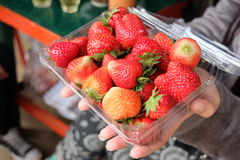 Ny jordgubbe i asken Fotografering för Bildbyråer