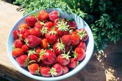 Ny jordgubbe i en platta på tabellen Arkivbild