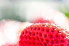 Ny jordgubbe med morgondagg i naturliga bakgrunder, blick som en juvel H?rlig bokeh med att bl?nka Organisk lantg?rd close fotografering för bildbyråer